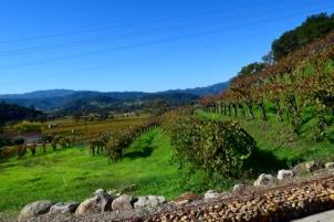 View across the Robert Sinskey Vineyard, Napa